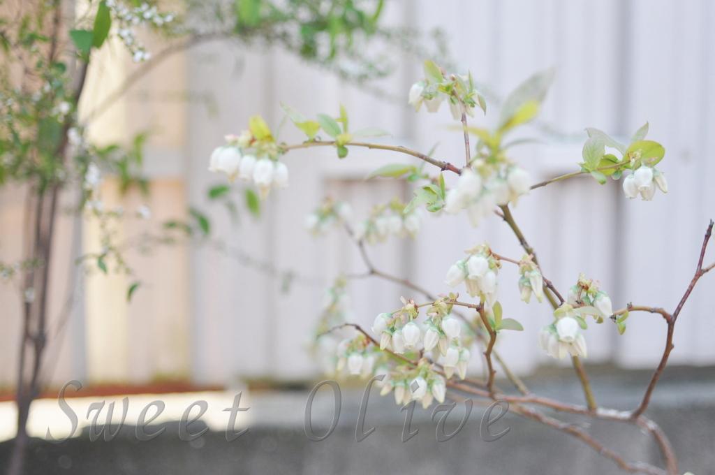 ブルーベリー,花,自宅ネイルサロン