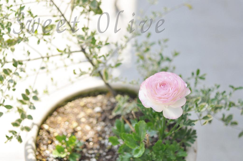 庭,寄せ植え,鉢植え,写真,自宅ネイルサロン