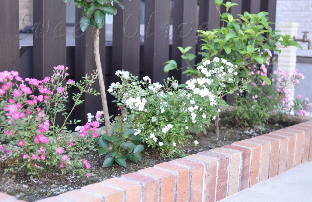 ミニバラ,庭,自宅ネイルサロン