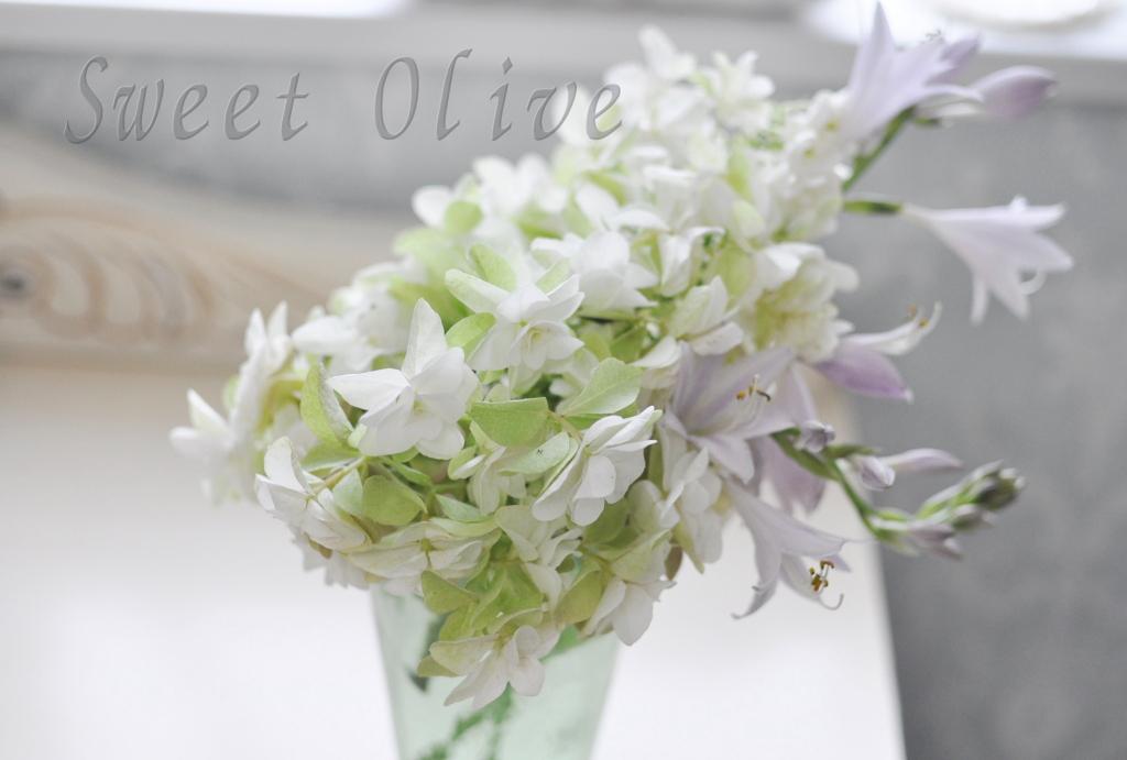 白,あじさい,アジサイ,紫陽花,花瓶